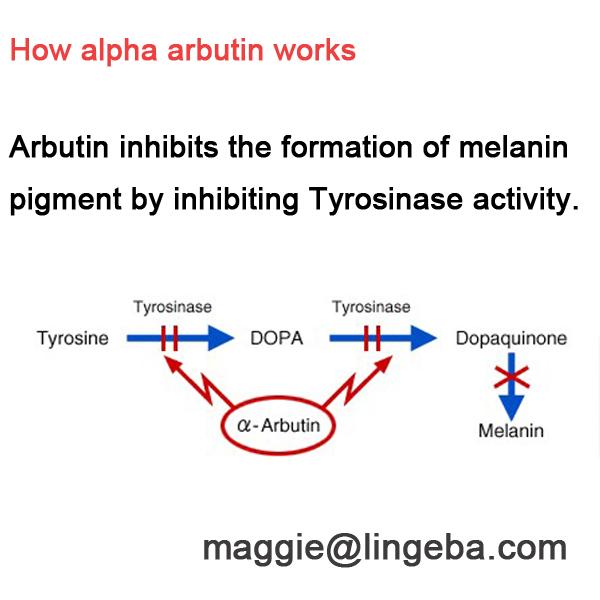 alpha arbutin, cosmetics raw materials bearberry extract